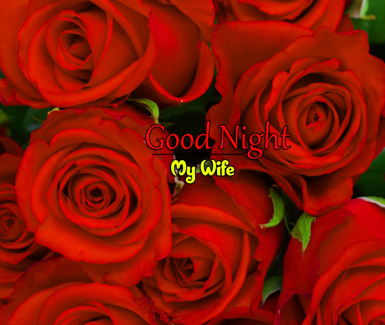 Red Rose Free Good Night Wishes k Images Pics Download