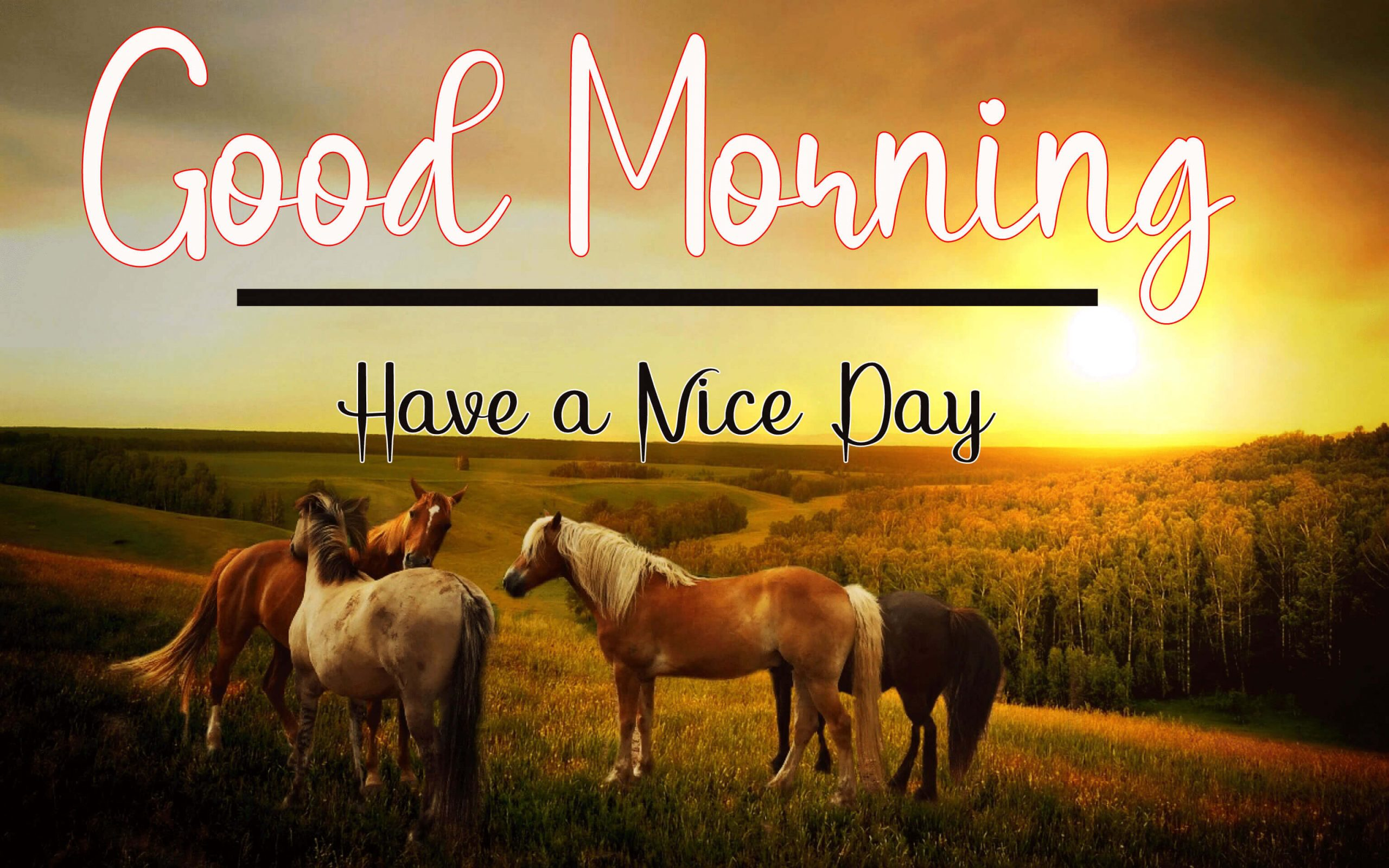 Top 189+ Good Morning Images for  Him HD Download