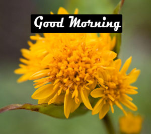 Beautiful Good Morning Images Pics Download With Flower