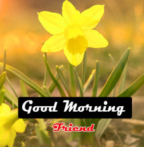 HD Beautiful Good Morning Images Pica Download