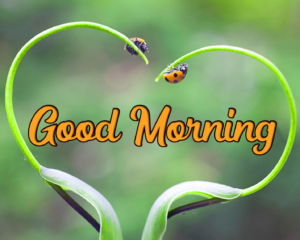 Good Morning Images Photo Download & Share Free