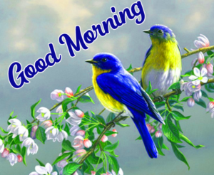 New Free Good Morning Images Pics