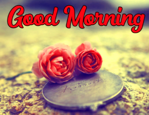 Good Morning Images With Rose