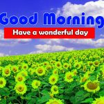 Cute Sunflower Good Morning Hd Free download