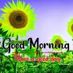 Cute Sunflower Good Morning Wishes