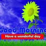 Latest Sunflower Good Morning Images Download