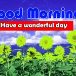 Latest Sunflower Good Morning HD Images Free Download