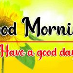Latest Sunflower Good Morning HD Free Download