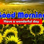 Latest Sunflower Good Morning Hd Images
