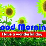 Latest Sunflower Good Morning Images HD