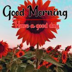 Latest Sunflower Good Morning Photo Free Download