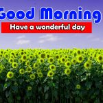 Latest Sunflower Good Morning Photo Download