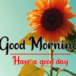 Sunflower Good Morning Images Hd