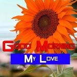 Sunflower Good Morning Photo Free Download