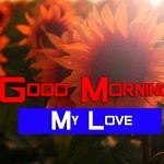 Sunflower Good Morning Pictures Free