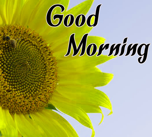 NewSunflower Good Morning Pictures