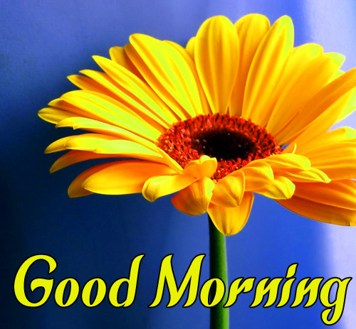 CuteSunflower Good Morning Images Hd