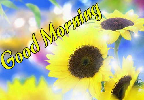 BestSunflower Good Morning Pictures