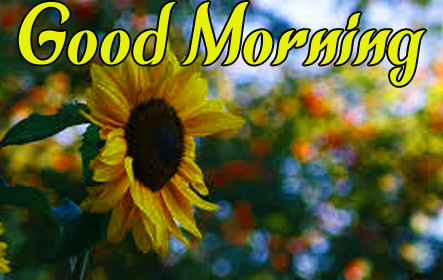 Sunflower Good Morning Images For Mother