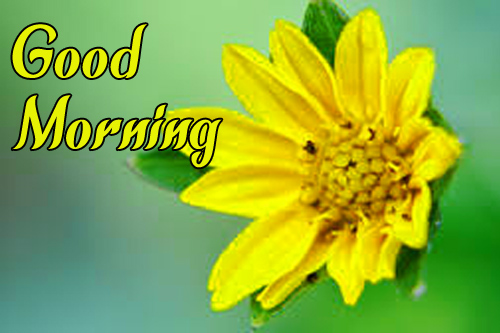 Sunflower Good Morning Images HD Download for Whats app