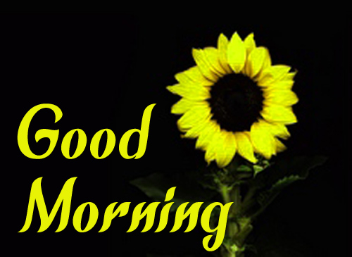 Sunflower Good Morning Photo For Father