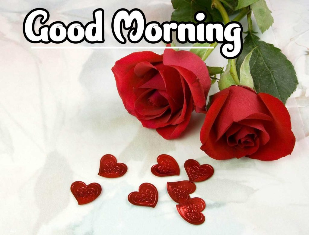 Latest Good Morning Images Wallpaper Pics With Red Rose